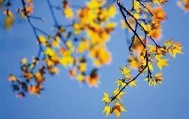 秋冬,为您定制五指山赏红叶最佳路线