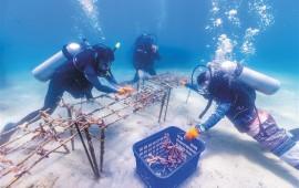 首届潜水主题系列活动陵水开幕