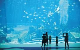 在海南,潜到海底,做一条自在的鱼