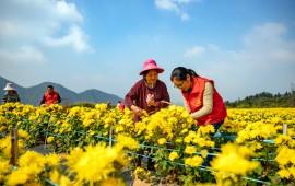 万花齐放春满园!三亚将迎来国际花卉旅游节