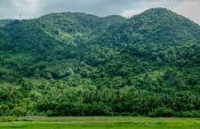海南热带雨林