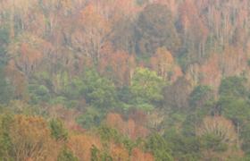 中国热带雨林