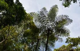 """热带雨林资源""""博物馆"""""""
