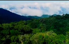 筑牢海南绿色生态屏障 《海南热带雨林国家公园条例(试行)》将于10月1日起施行