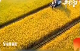 中国农民丰收节:大江南北 红黄绿橙勾勒出最美秋收