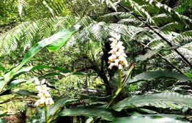 海南积极推进热带雨林国家公园建设,筑牢绿色生态屏障
