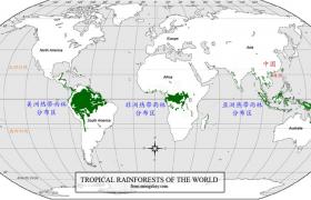 世界热带雨林