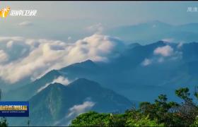 """海南热带雨林国家公园体制试点成效突出 为生物多样性保护贡献""""海南智慧"""""""