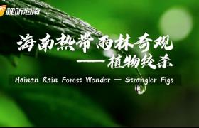 海南热带雨林奇观——植物绞杀Hainan Rain Forest Wonder — Strangler Figs