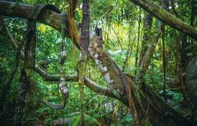 """探寻热带雨林中植物的""""秘密"""""""