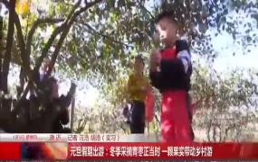 元旦假期出游:冬季采摘青枣正当时 一颗果实带动乡村游