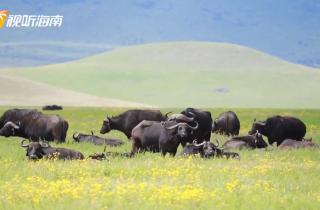 """""""非""""同凡""""想""""Vlog之坦桑尼亚——动物伊甸园"""