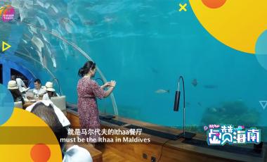 A feast at the undersea restaurant: Underwater Show