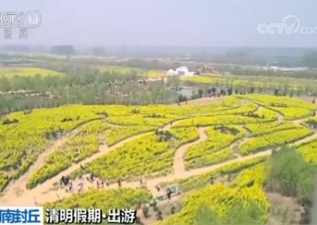 【清明假期·出游】春風又綠黃河岸 油菜花開游人來