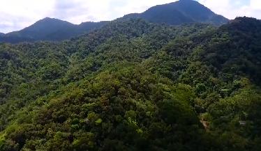 走进国家公园 探访热带雨林 尖峰岭生态站:建立64公顷次生林样地 网格化监测森林生物多样性动态