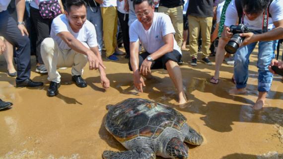 中国海龟保护联盟在三亚成立 34只海龟回归大海