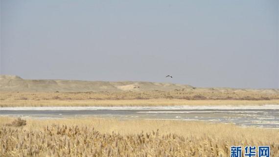 探访敦煌西湖国家级自然保护区