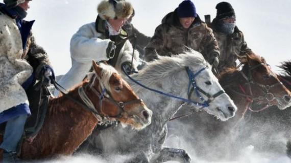 新疆昭苏马群雪地驰骋气势如虹