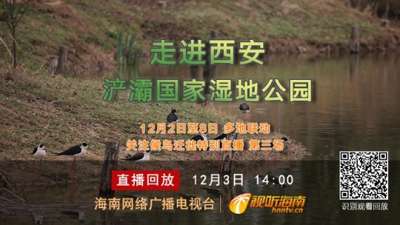 回看:東部候鳥遷徙之路 走進西安浐灞國家濕地公園
