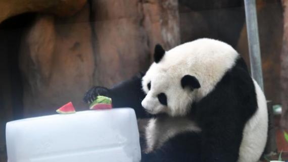 成都动物园采取防暑降温措施让动物清凉过夏