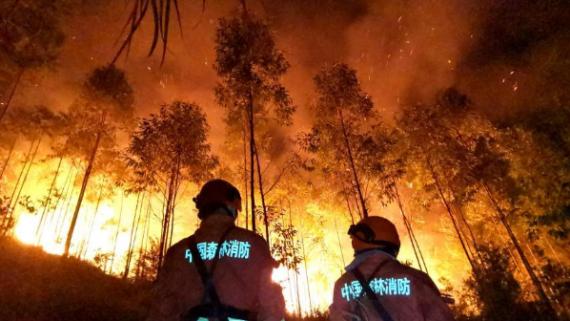 福建漳浦突发山火 森林消防驰援灭火