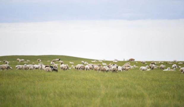 走向我们的小康生活|草原有了网,手机能放羊——看呼伦贝尔大草原牧民生活变了样