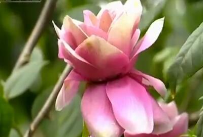 我为海南大声唱:《石榴园》下相依鼓励 海南爱情开花结果