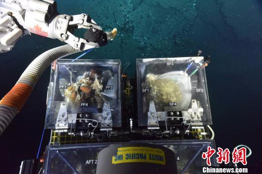 """""""南海深部计划""""遥控深潜科考航次告捷获多项发现"""