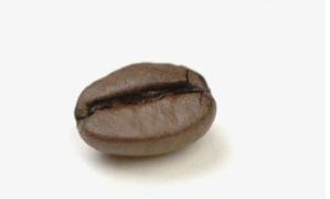 一颗咖啡豆背后的开放故事