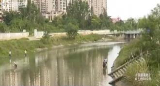 美舍河漂浮大量死鱼 气温变化+缺氧引发