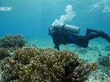 """我和我的祖国·我们都是追梦人:""""珊瑚爸爸""""陈宏和他的""""百万珊瑚计划"""""""