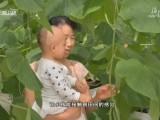 春节黄金周:海口桂林洋热带农业公园 绿意盎然 寓教于乐