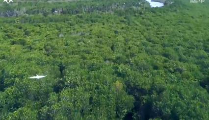 清明节前夕:海南采取有效措施强化森林防火 防范森林火灾发生