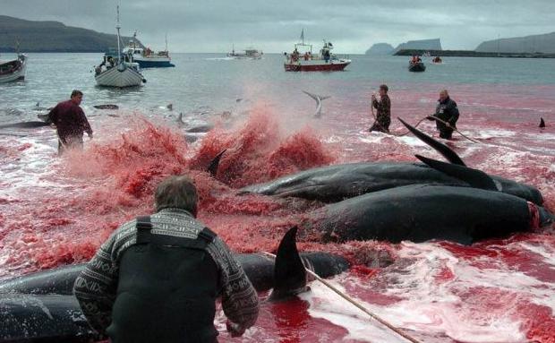 調查:近七成日本人對重啟商業捕鯨予以肯定