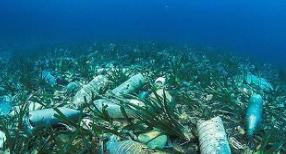 """《巴塞尔公约》修订 向全球塑料污染转嫁模式""""亮剑"""""""