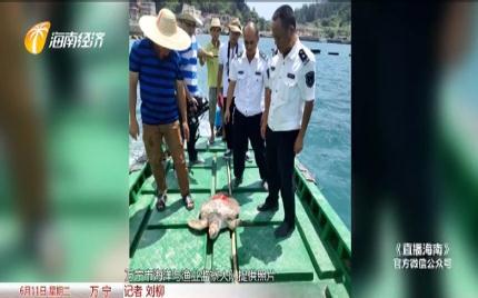 海龟撞进渔网 众人合力放生