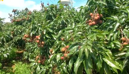 海南加速度:海南农垦集中开工项目建设提速