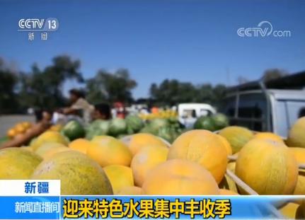 新疆迎来特色水果集中丰收季 多种销售渠道助推当地林果业发展