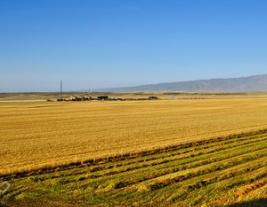 农业农村部:重点防控草地贪夜蛾 抓好秋粮生产