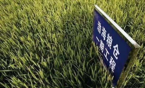"""""""渤海粮仓""""工程:五年增粮200多亿斤丨壮丽70年 奋斗新时代"""