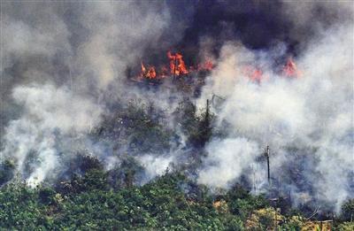 亚马孙雨林大火或造成永久性伤害