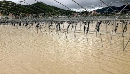 """直击台风""""白鹿"""":农田被淹电网受损 民众展开自救"""