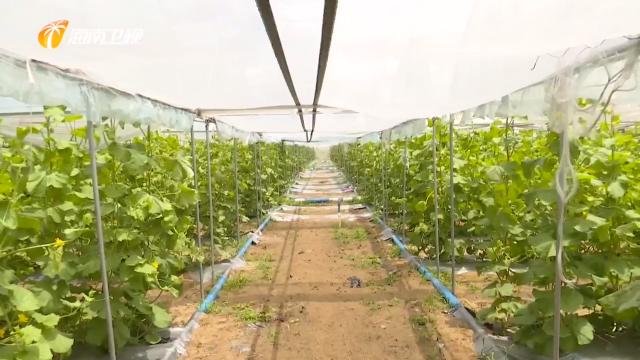 海南:深入推进农业供给侧结构性改革 打造热带特色高效农业王牌