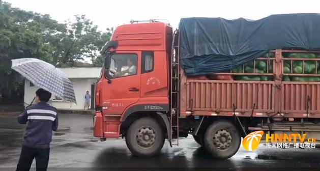 到了!2200吨应急蔬菜瓜果抵琼