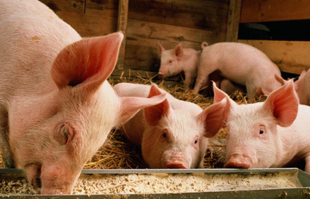 农业农村部部署生猪生产农机装备购置补贴