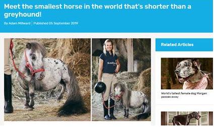 波兰发现世界上最小的马!高度仅为56厘米