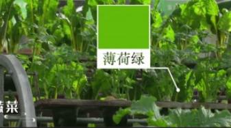 最美中国色|三分钟回眸辉煌70年之现代农业篇