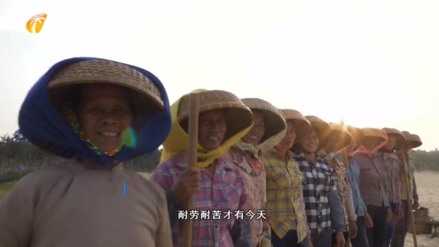 """昌江举办""""绿色娘子军""""奋斗足迹展 致敬生态建设榜样"""