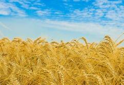 主要粮食作物耕种收综合机械化率超八成 田里多了不少新科技