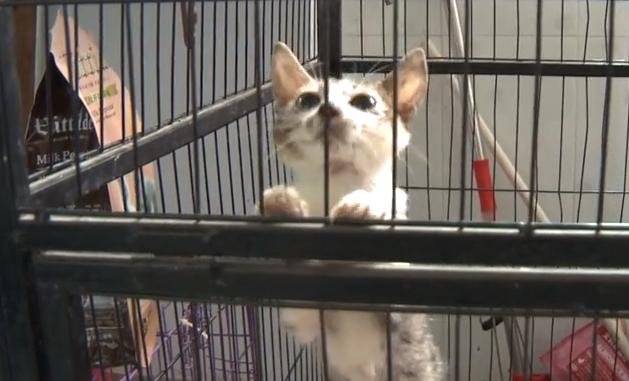 海南警方截獲300多只遭非法運輸貓 動保協會緊急救助